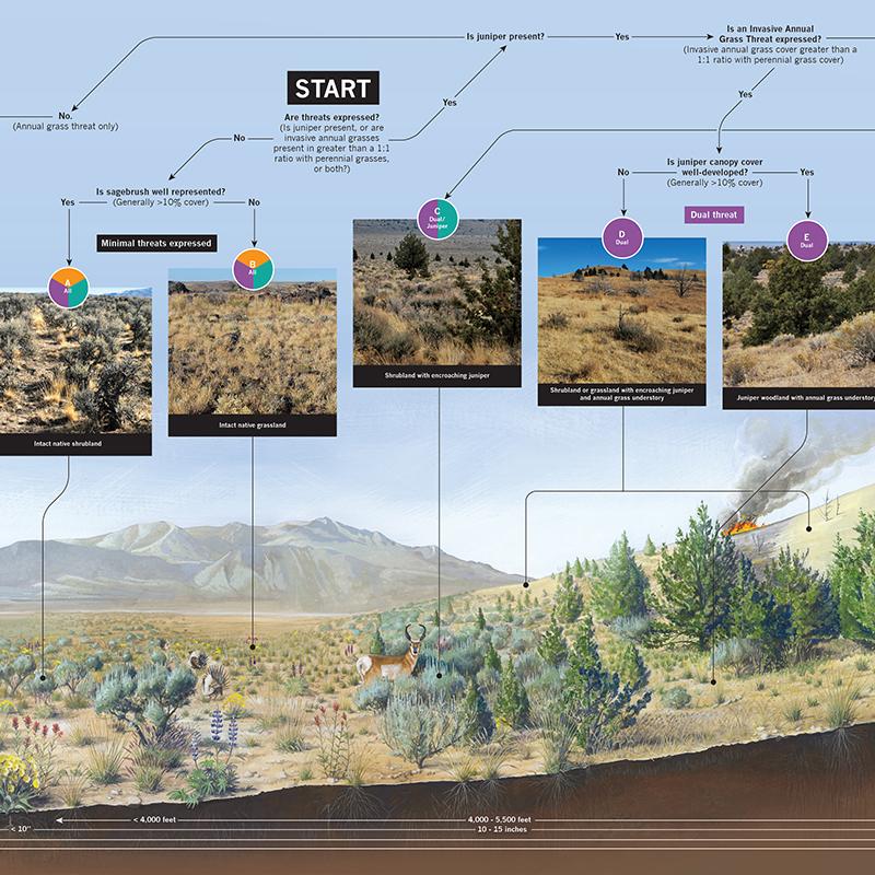Determining Rangeland Health in the Great Basin